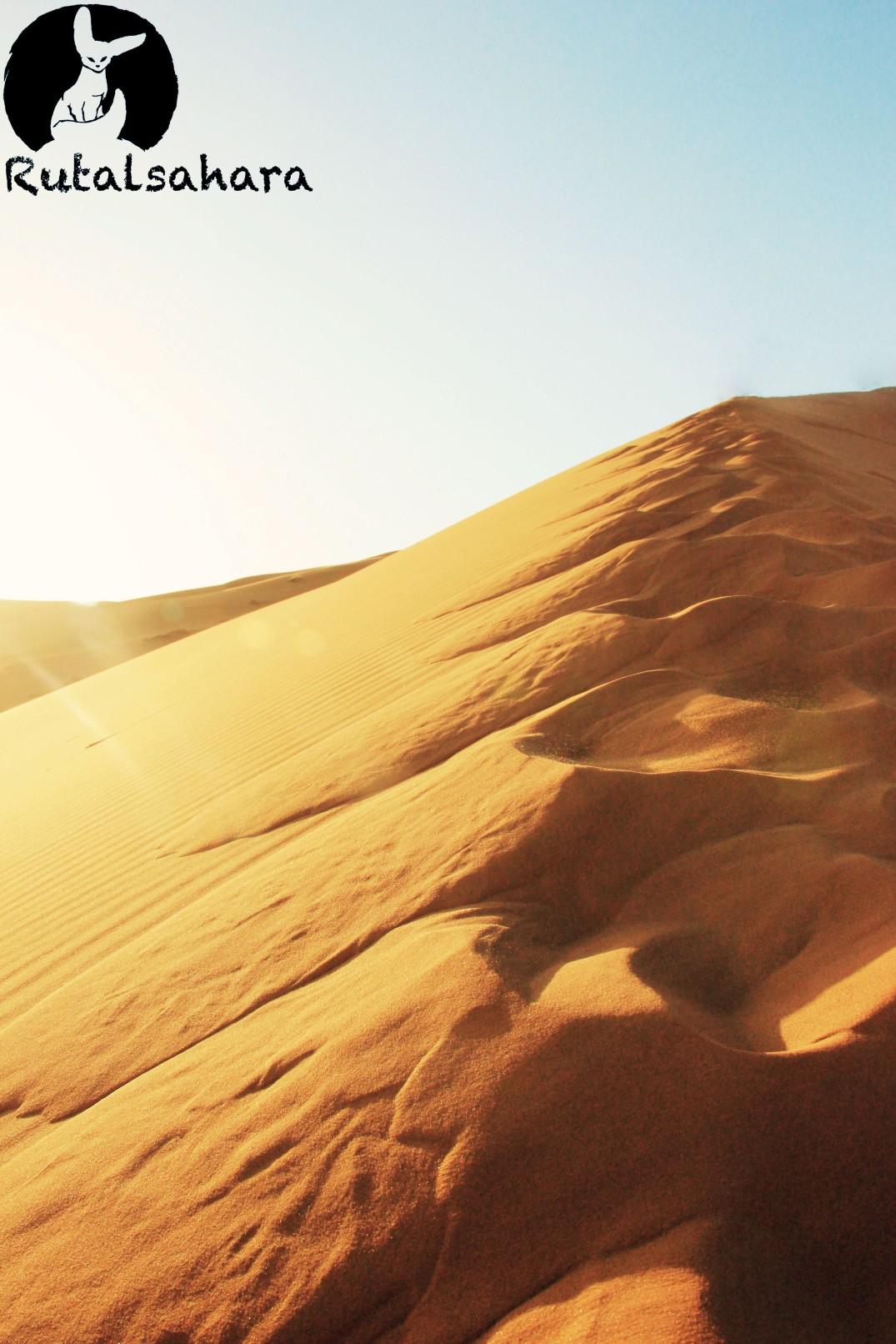 follow the desert